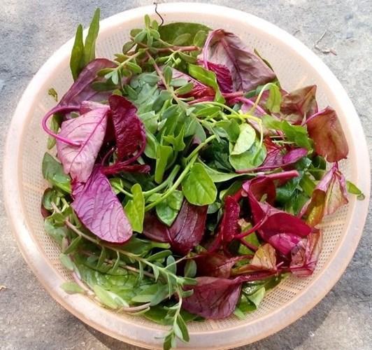 Rau tập tàng còn gọi là rau láo nháo, là thứ hỗn hợp gồm đủ loại rau dại như rau dền, rau sam, rau đay... tìm thấy ở vườn nhà hoặc bất kỳ bờ bụi nào. Ngày trước, rau quả cũng rất hiếm, trong vườn trồng đủ thứ, nên đến bữa đi làm đồng về, tranh thủ ra vườn hái nắm rau tập tàng này nấu canh với cua đồng ăn với cơm rất tuyệt.Ảnh: Internet