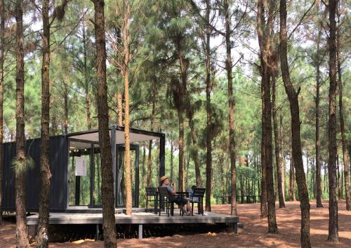 Khu rừng thông bên hồ trở thành triển lãm ngoài trời. Ảnh: Art in the forest.