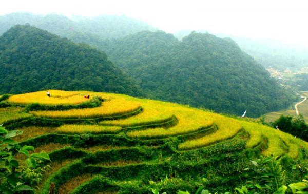 Ruộng bậc thang - điểm nhấn du lịch sinh thái các xã: Lũng Vân, Quyết Chiến, Ngổ Luông.