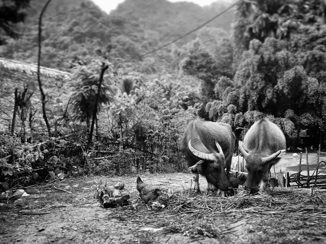 Một trong những điều khiến Thác Mu được yêu thích đó là đời sống sinh hoạt và nếp văn hóa của người dân sống ở đây. Những ngôi nhà sàn đặc trưng, những thửa ruộng canh tác và người dân hiền lành, chất phác.