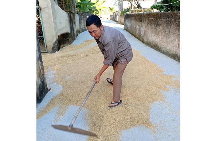 Anh Nguyễn Mạnh Hà thu thóc giúp người dân trong xóm.