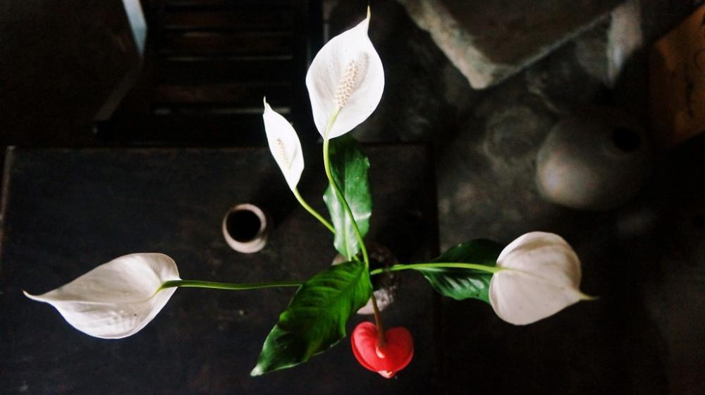 Chiếc bàn, lọ hoa hay nhành hoa ở Chiều cũng đều toát lên vẻ bình dị như thế...