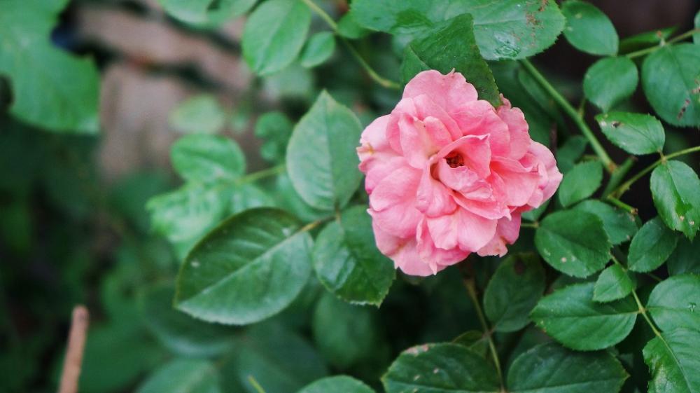 Hoa mới nở bên hiên nhà.