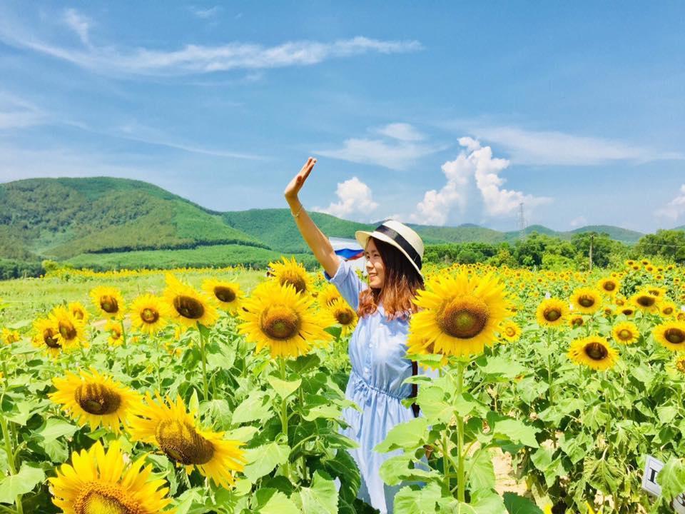 Hiện nay, nông trại hữu cơ Bạch Dương đang thu hút rất nhiều du khách ghé thăm nhờ cánh đồng hoa hướng dương.