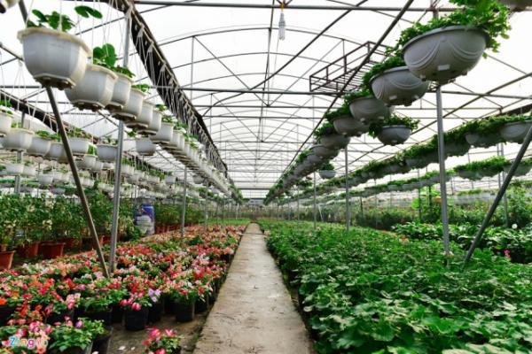 Nông dân Xuân Quan mạnh dạn đầu tư khoa học thuật, cơ sở hạ tầng để trồng hoa cây cảnh ứng dụng công nghệ cao nhằm nâng cao năng suất, chất lượng và hạ giá thành sản phẩm. Nguồn: Internet