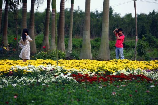 Làng hoa Xuân Quan điểm du lịch hấp dẫn thu hút du khách trong và ngoài nước đến thăm quan, mua sắm và chụp ảnh lưu niệm những ngày cuối tuần. Nguồn: Internet