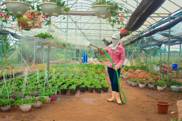 Tưới nước cho cây, hoa trong nhà kính- Ảnh Ng Phương Huệ