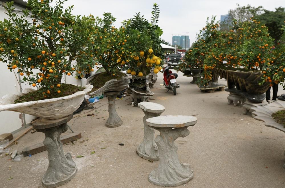 Bên cạnh những loại quất cảnh, bonsai truyền thống, bộ sưu tập