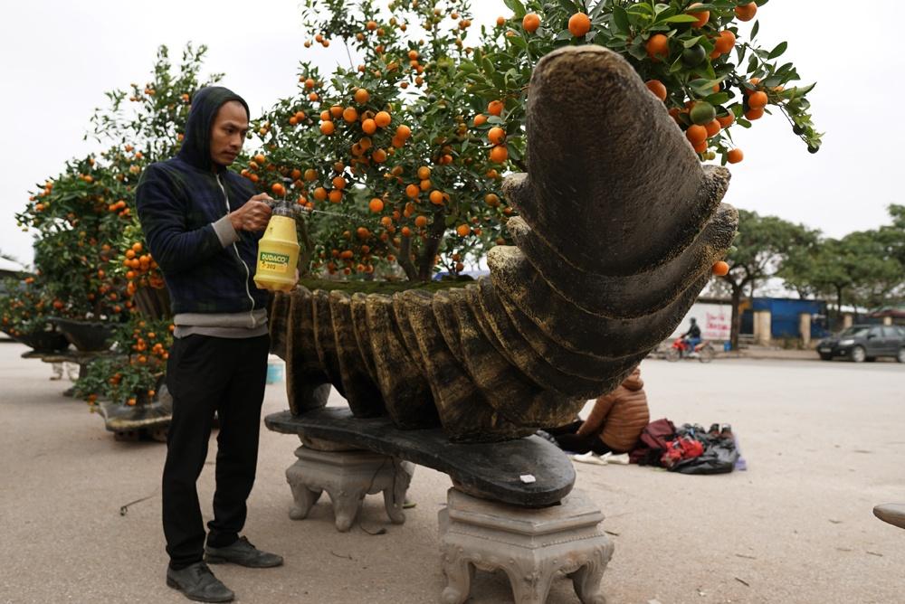 Anh Hoàn cho biết, gia đình anh tại Văn Giang có nghề trồng cây cảnh truyền thống và ý tưởng tạo hình các chậu quất cảnh mang