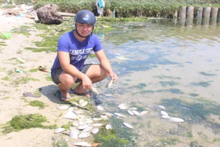 Nước thải từ Nhà máy đường Khánh Hòa khiến thủy sản nuôi trồng của nhiều hộ dân bị chết hàng loạt. Ảnh: Lao động