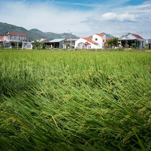 Nằm phía dưới chân đồi, sát đường làng với cánh đồng rộng mênh mông là ngôi nhà cấp 4 với thiết kế vô cùng độc đáo tại Nha Trang, Khánh Hòa.