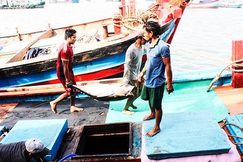 Ngư dân khai thác cá ngừ đại dương đạt sản lượng rất thấp