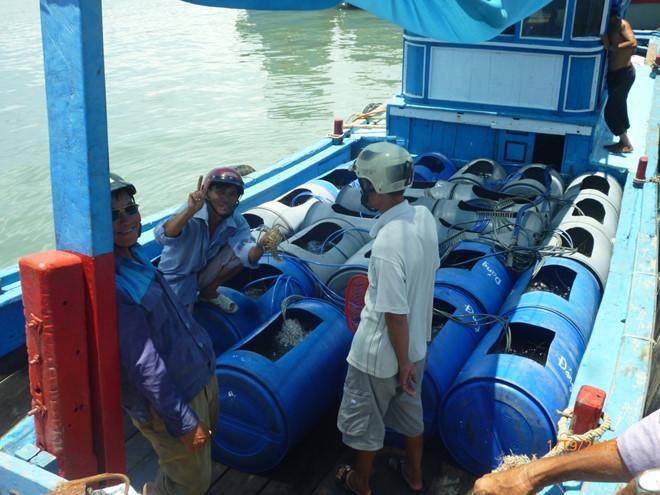Tôm hùm phân theo loại để trong những cái thùng xanh như thế này lúc ở trên thuyền.