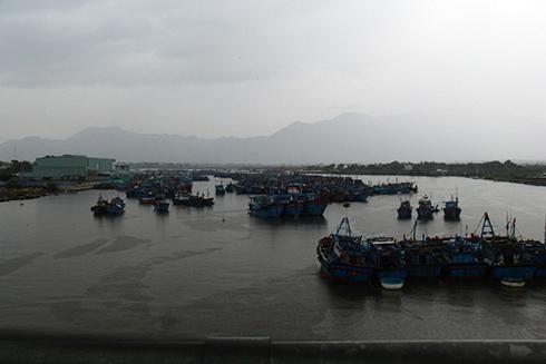 Hàng trăm tàu thuyền của ngư dân đã vào neo đậu an toàn tại Khu neo đậu tránh trú bão Ninh Hải.