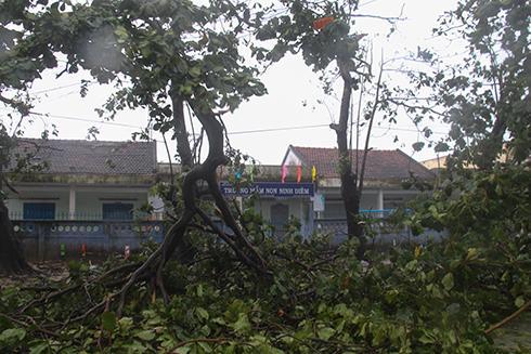 Cây cối bị bão quật gãy ngọn
