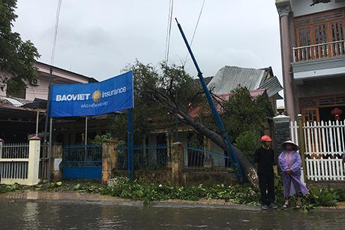 Cây đổ vào nhà dân ở thị trấn Diên Khánh