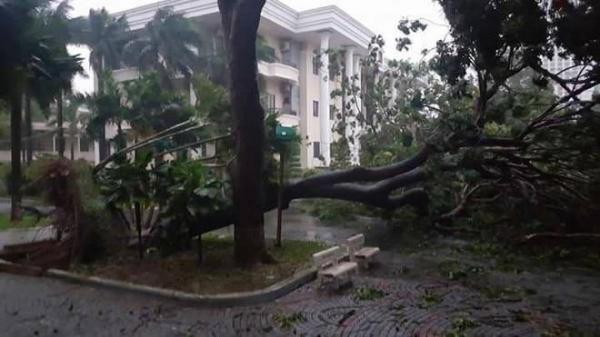 CẬP NHẬT tình hình nơi bão số 12 quần thảo: Ngồi trong nhà nghe ầm ầm cây đổ, mái tôn bay