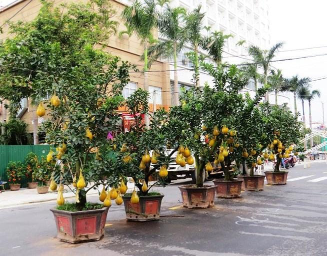 Những cây bưởi trái vàng lúc lỉu tượng trưng cho năm mới tài lộc, sung túc được bày bán từ rất sớm.