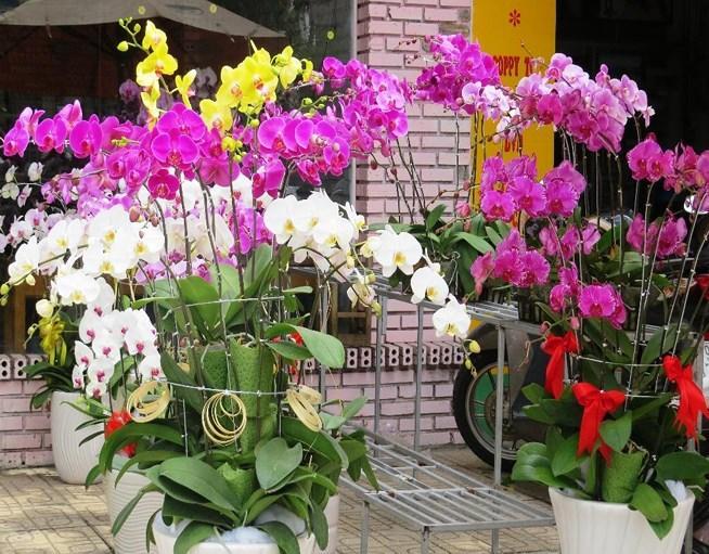 Nhiều năm nay, hoa lan cũng là một trong các mặt hàng hút khách dịp Tết. Đây cũng là loại hoa được nhiều người lựa chọn để biếu, tặng nhân các dịp Lễ, tết.