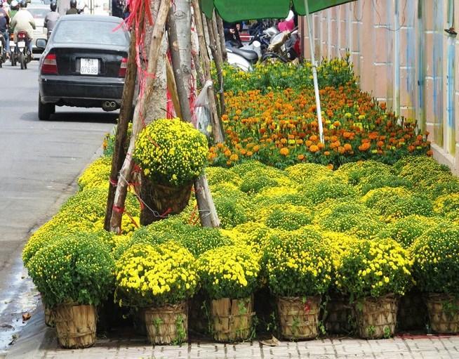 Chợ Tết nên không thể thiếu những loại hoa quen thuộc như bông vạn thọ, cúc mâm xôi.