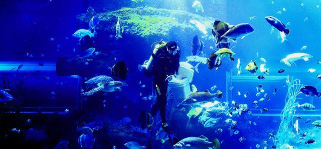 Viện hải dương học Nha Trang- ảnh Vntrip.vn