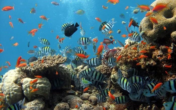 Những chú cá đủ màu sắc dưới đáy biển- Ảnh Khata.vn