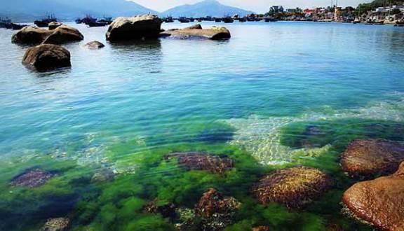 Ở đây biển không quá sâu, chỉ cần bạn lội ra vài chục mét, là đã thấy san hô ngay dưới chân. Ảnh minh họa.