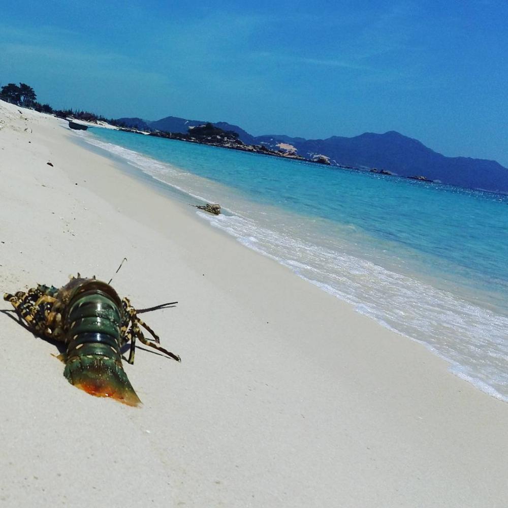 Bãi Ngang trên đảo là bãi biển mà dân ở đây nuôi tôm giống, rất nhiều lưới, chai giăng chia khu vực nuôi tôm, vì biển ở đây còn rất sạch và trong nên mới nuôi được tôm giống đó. Đặc biệt biển ở đây rất hoang sơ, không một bóng người, sạch, trong, đẹp tuyệt vời. Ảnh: Kenhdulich.org.