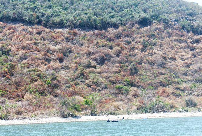 Rừng ở Vân Phong đang bị phá để lấy đất.