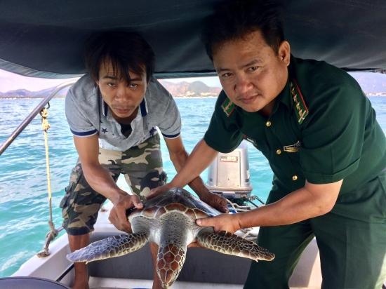 Các thể rùa biển đã được thả về với môi trường tự nhiên. Ảnh: Văn Huệ