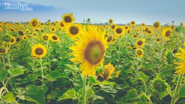 Nhớ không ngắt, bẻ hoa, giữ cảnh quan chung để những người đến sau vẫn có hoa đẹp để ngắm