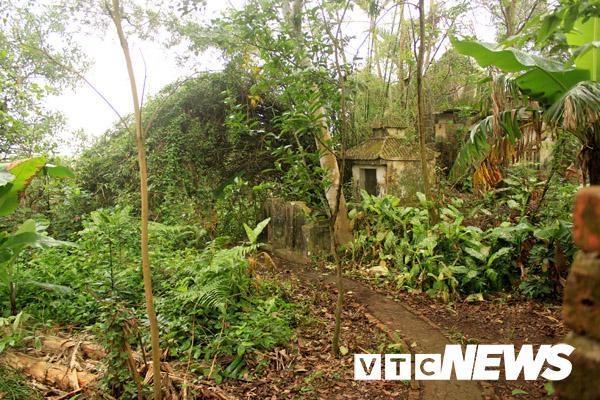 Khu vườn nơi con vịt kỳ lạ trú ngụ (Ảnh: VTC News)
