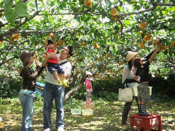 Về miền hoa trái du khách không thể bỏ qua trải nghiệm đi thăm vườn cây ăn quả. Ảnh minh họa.