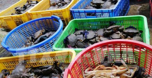 Giá cua biển giảm sâu, nông dân không có nơi tiêu thụ. Ảnh: Lê Sen - TTXVN