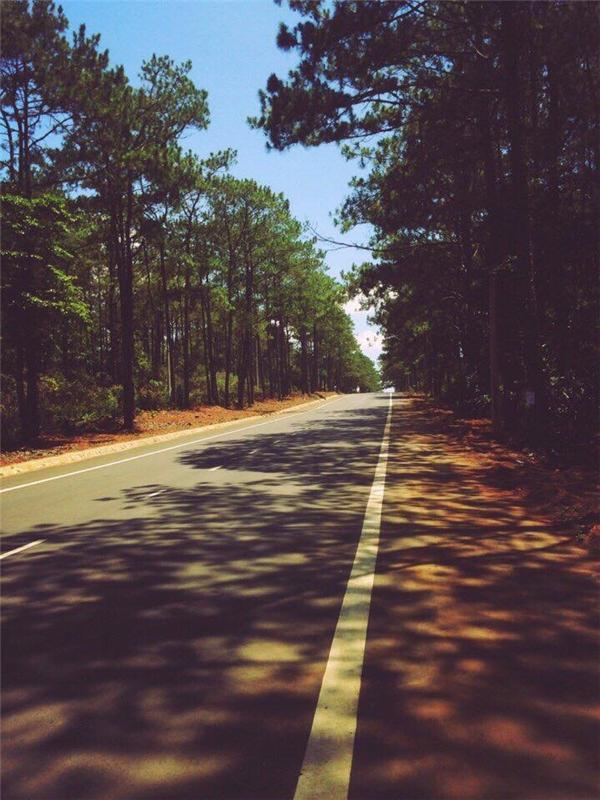 Hai bên đường thông xanh rợp bóng.