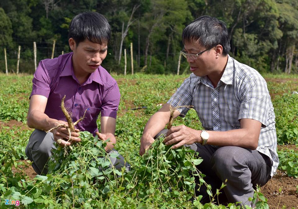 Ông mua củ sâm dây tự nhiên của đồng bào dân tộc Kadong, Mơ Nông (Kon Tum) đào được trong rừng mang về nhân giống.