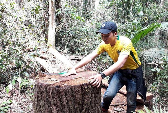 Hiện trường lâm tặc phá rừng trái phép trên địa bàn xã Đắk Ruồng