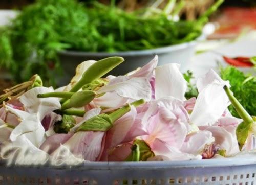 Hoa ban được hái là những bông hoa đã nở rộ, tránh hái nụ để mùa sau hoa còn nở nhiều. Ảnh: Lương Ngọc
