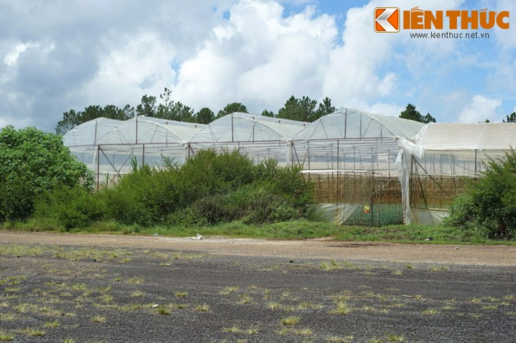 Các vườn ươm của nông dân Đà Lạt mọc lên khá nhiều trong phạm vi sân bay.