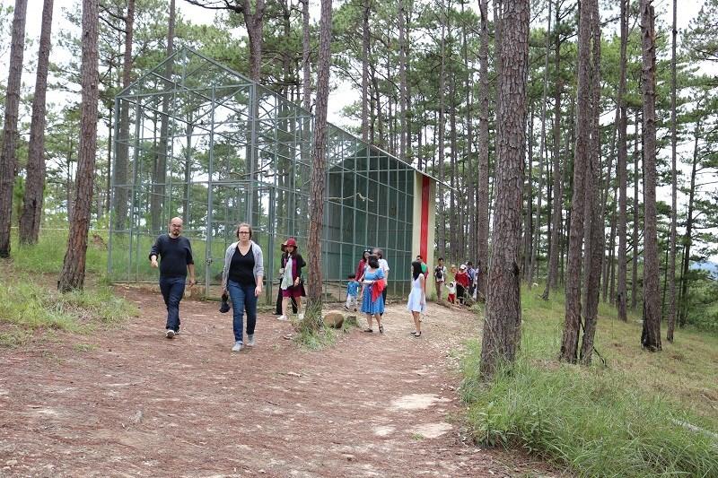 Du khách đến tham quan được đi bộ dưới rừng thông...
