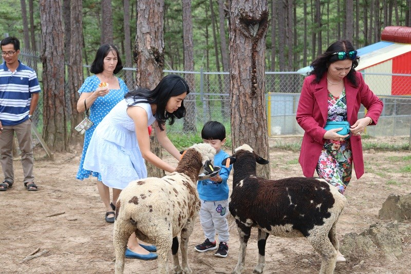 Những chú cừu đáng yêu với bộ lông dày, ấm...