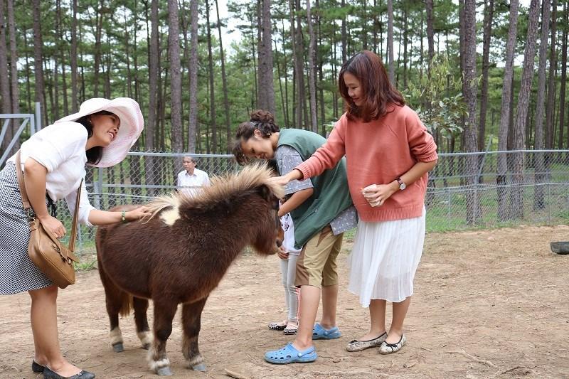 Mấy chú ngựa lùn Pony ở đây vừa được cắt tóc nên nhìn ngố ngố, sau đó một thời gian sẽ đẹp hơn lúc mới cắt... Ở Zoo Doo có hai chú ngựa đang mang thai nên được tách riêng ra để chăm sóc vì khi mang thai chúng sẽ rất khó tính, háu đá. Một trong những điều chú ý khi chơi đùa với chúng là tránh đứng phía sau vì có khi sẽ bị nó đá...