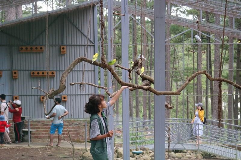 Loài chim yến đang được các hướng dẫn viên chăm sóc...