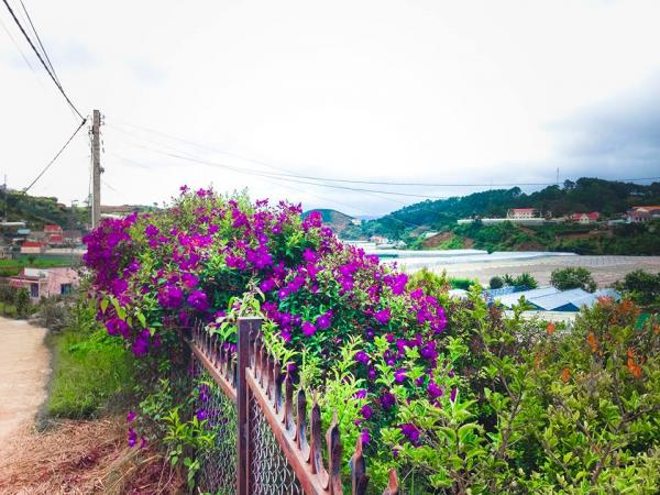 Con đường dẫn lên đồi cũng đẹp đến lạ...