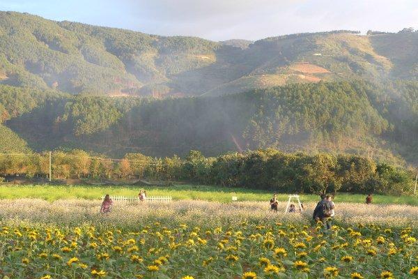 Cánh đồng hoa lãng đãng trong làn khói như sương sớm bên đèo Tà Nung.