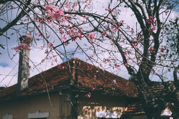 Đà Lạt đang ngập trong sắc hoa. (Ảnh: @xolovebys)