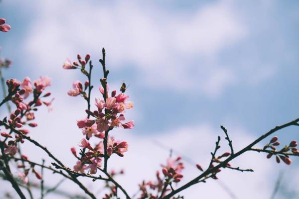 Hoa nở rực trời. (Ảnh: @xolovebys)