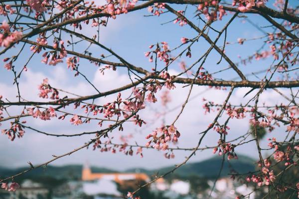 Những đốm hồng đang được dệt trên nền trời xanh thẳm. (Ảnh: @xolovebys)