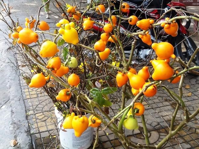 Một trong những loại quả rất được ưa chuộng vào dịp Tết hiện nay chính là trái dư hay còn gọi là quả cà vú.
