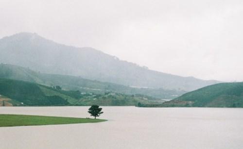 Cây thông cô đơn bên hồ Suối Vàng, nơi thanh niên để lại bức thư tuyệt mệnh rồi xuống hồ tự tử.